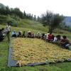 La Libertad promueve comercialización de quinua